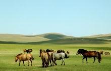 Gegentala Grassland in Hohhot